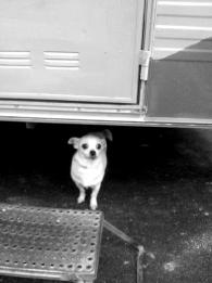 Un chien... petit...