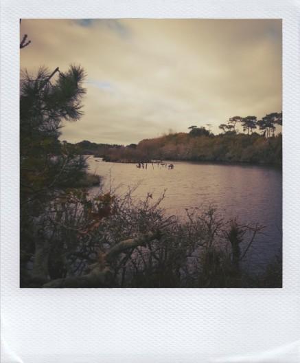 Marais du Mousterlin